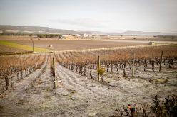 Breve Crónica de Viagem Cegueta – Ribera del Duero